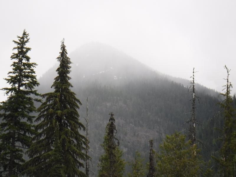 Mist around Park Creek