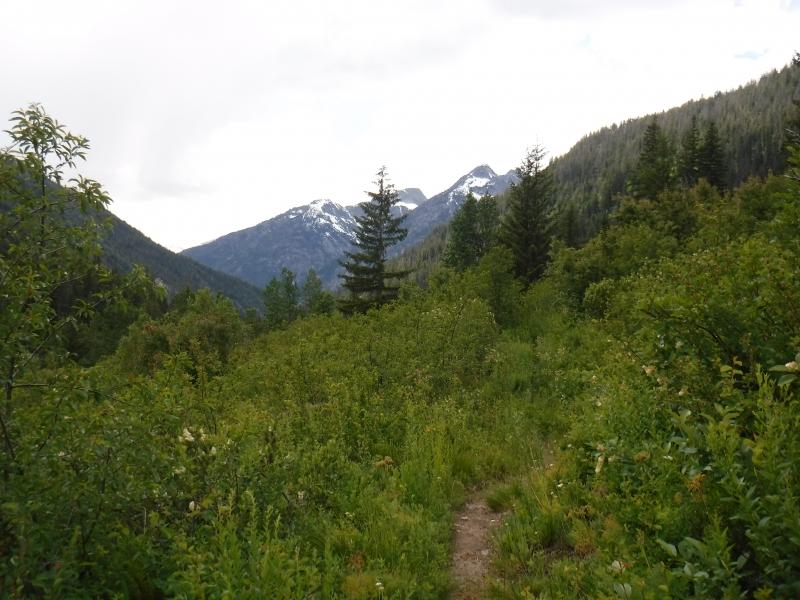 Trail up Bridge Creek