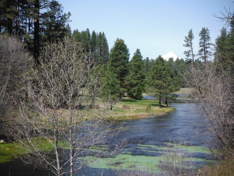 Head of the Metolius river
