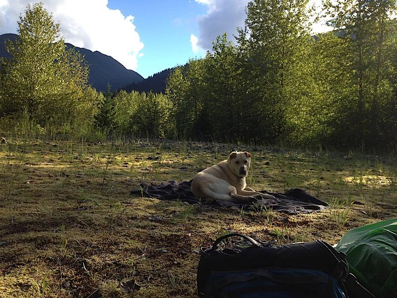 Skagit River Camp