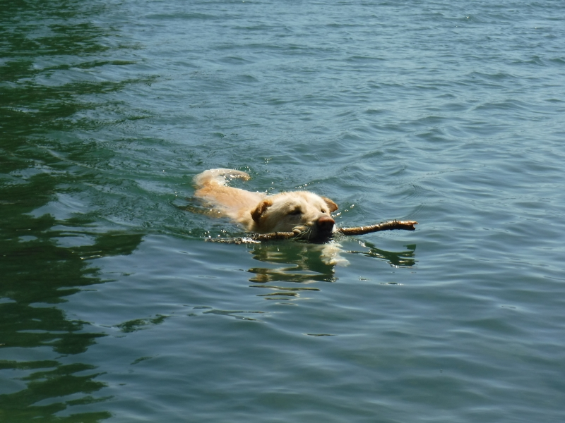 Gotta get that stick