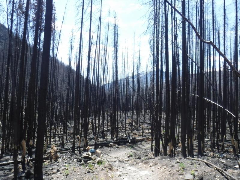 2017 Pasayten Wilderness Burn