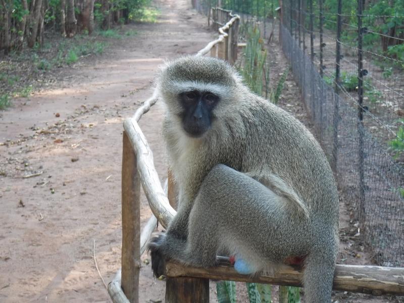 Lilongwe Wildlife Refuge