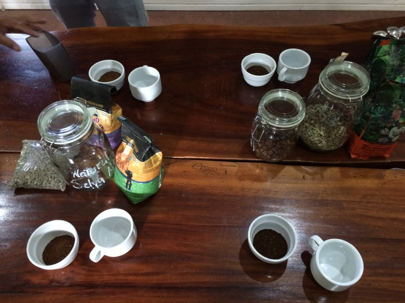 Coffee tour and tasting at Selva Negra