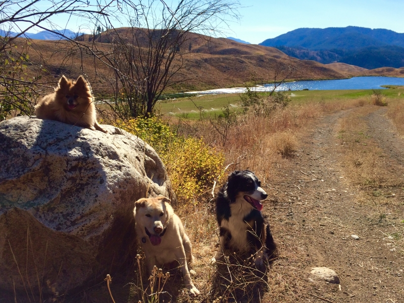 Three Dog Hike