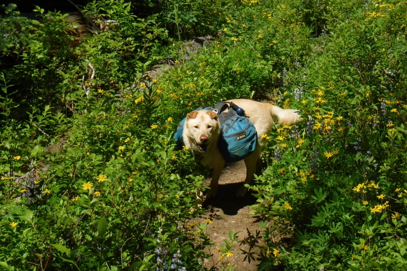 Happy Dog on the PCT