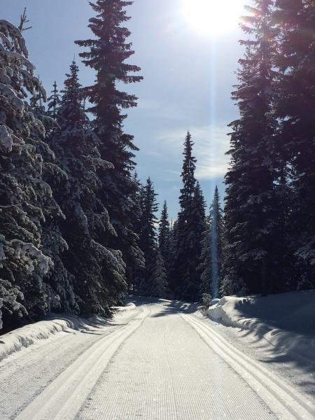 Rogers Pass ski
