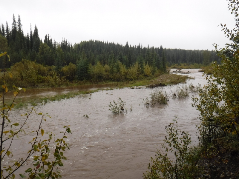 Lots of recent rain Sept 2 North of Kiskatinaw