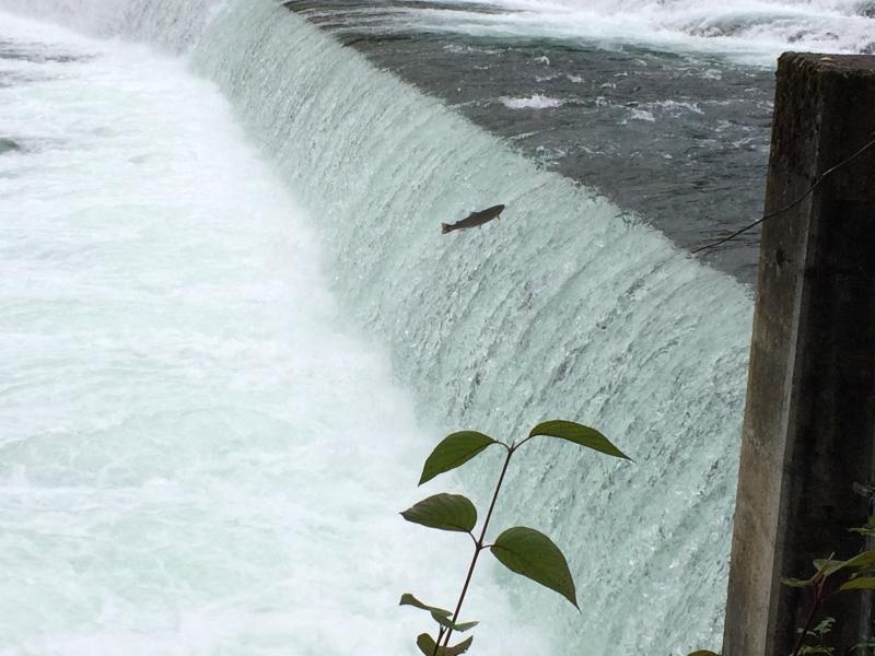 Stikine River Sept 13