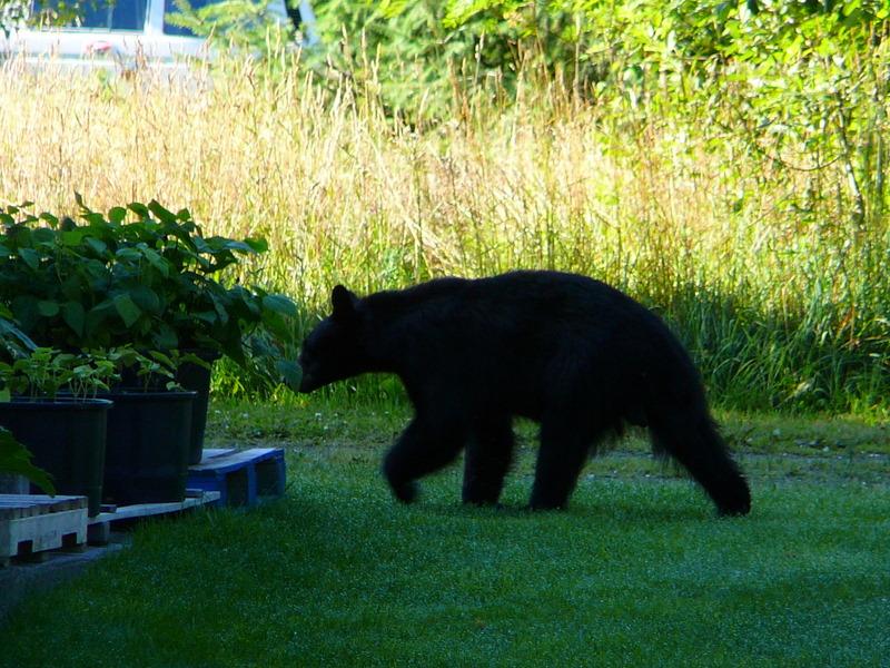 Bear on a mission!