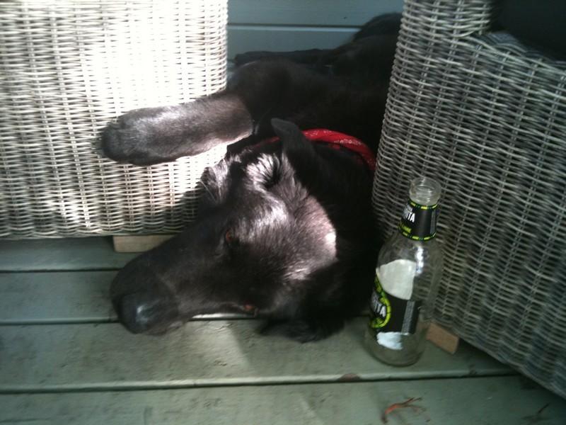 Tired dog at BBQ