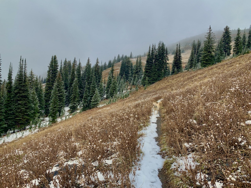 PCT near Harts Pass