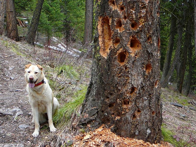 Woods Gulch Missoula Montana