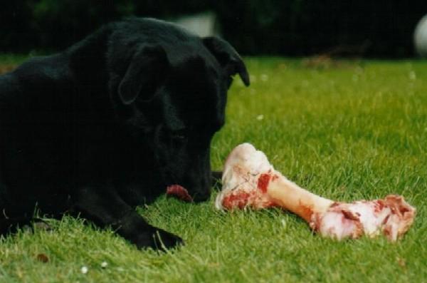 A real bone