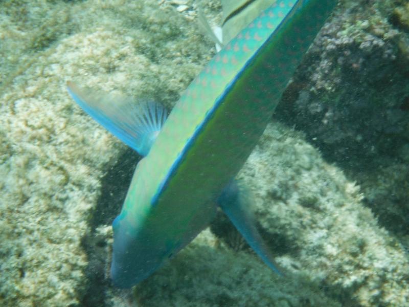 Snorkelling Kahaluu Bay