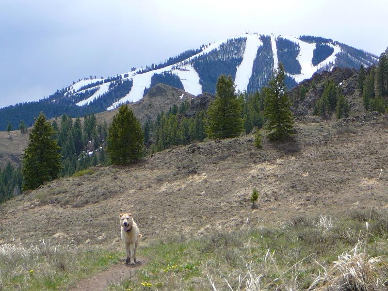 Adams Gulch hike - Bald Mountain ski hill in the background