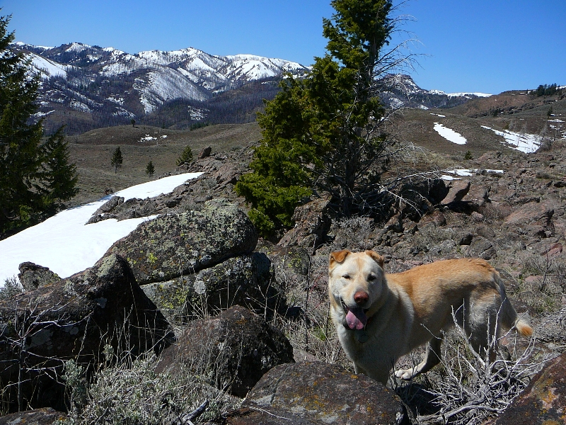 Made it to the top - Greenhorn Gulch hike near Hailey ID