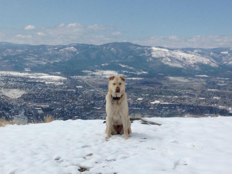 Top of Mount Sentinel Missoula MT