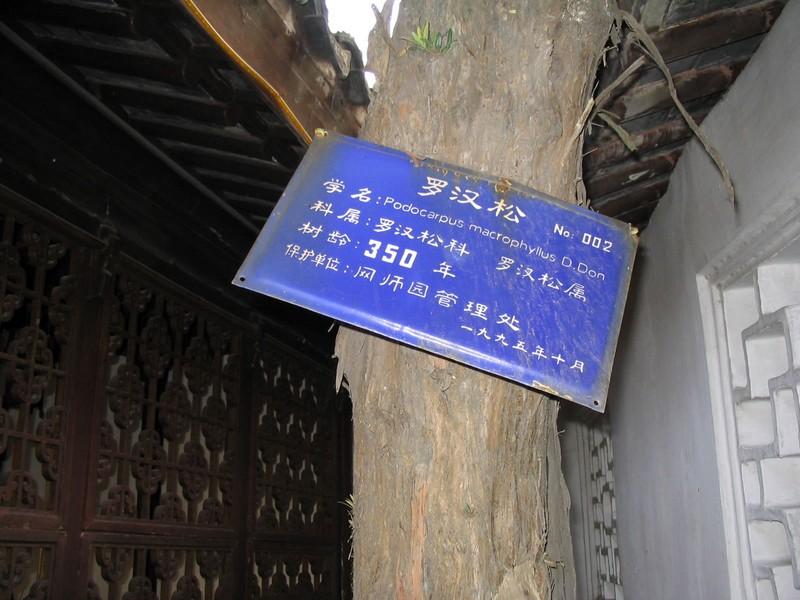 shanghai-64
