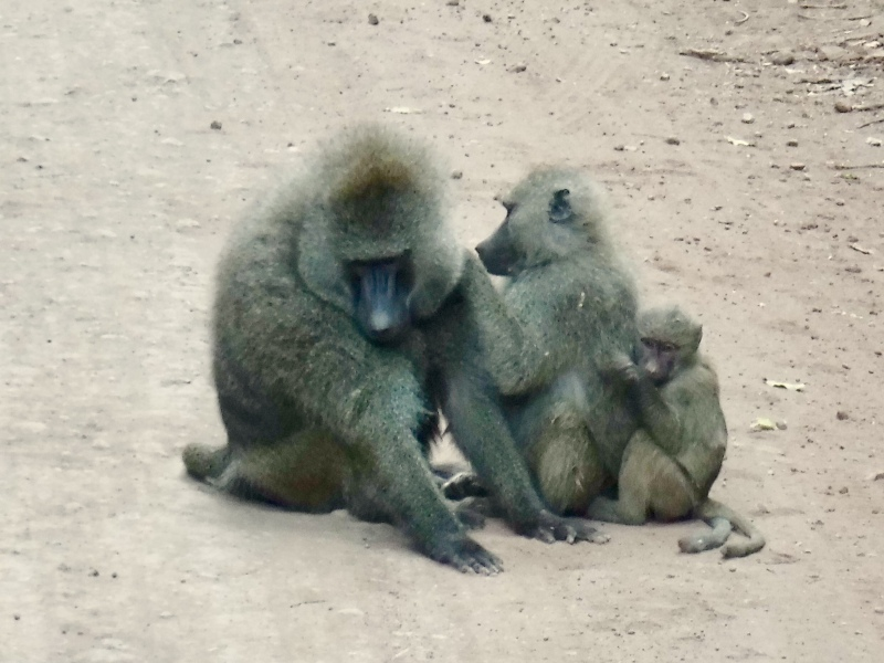 Threesom at Lake Manyara National Park
