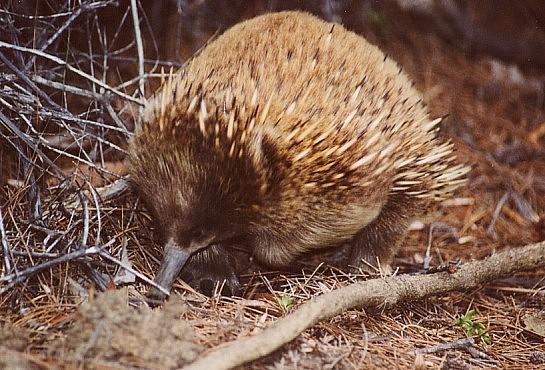 tasmania-14
