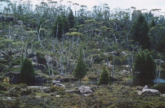 tasmania-42