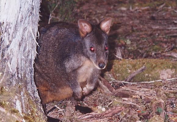 tasmania-7