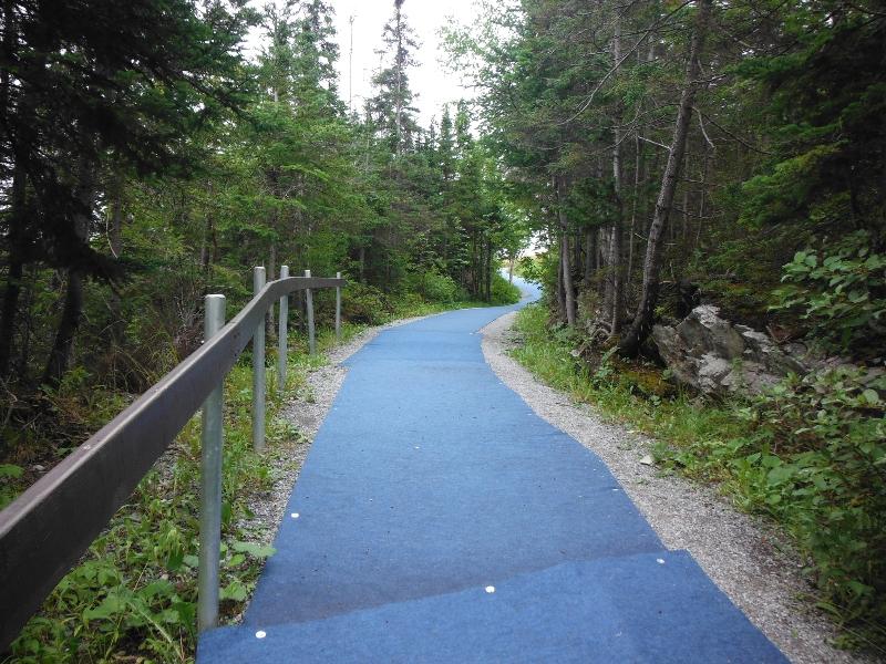Corner Brook Triathlon swim exit - NL