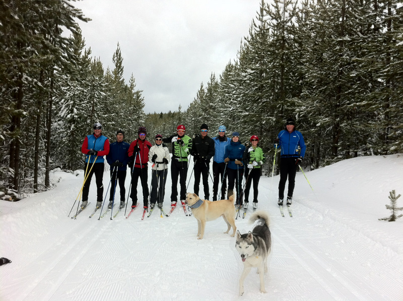 Big Group at Nordic plus dogs