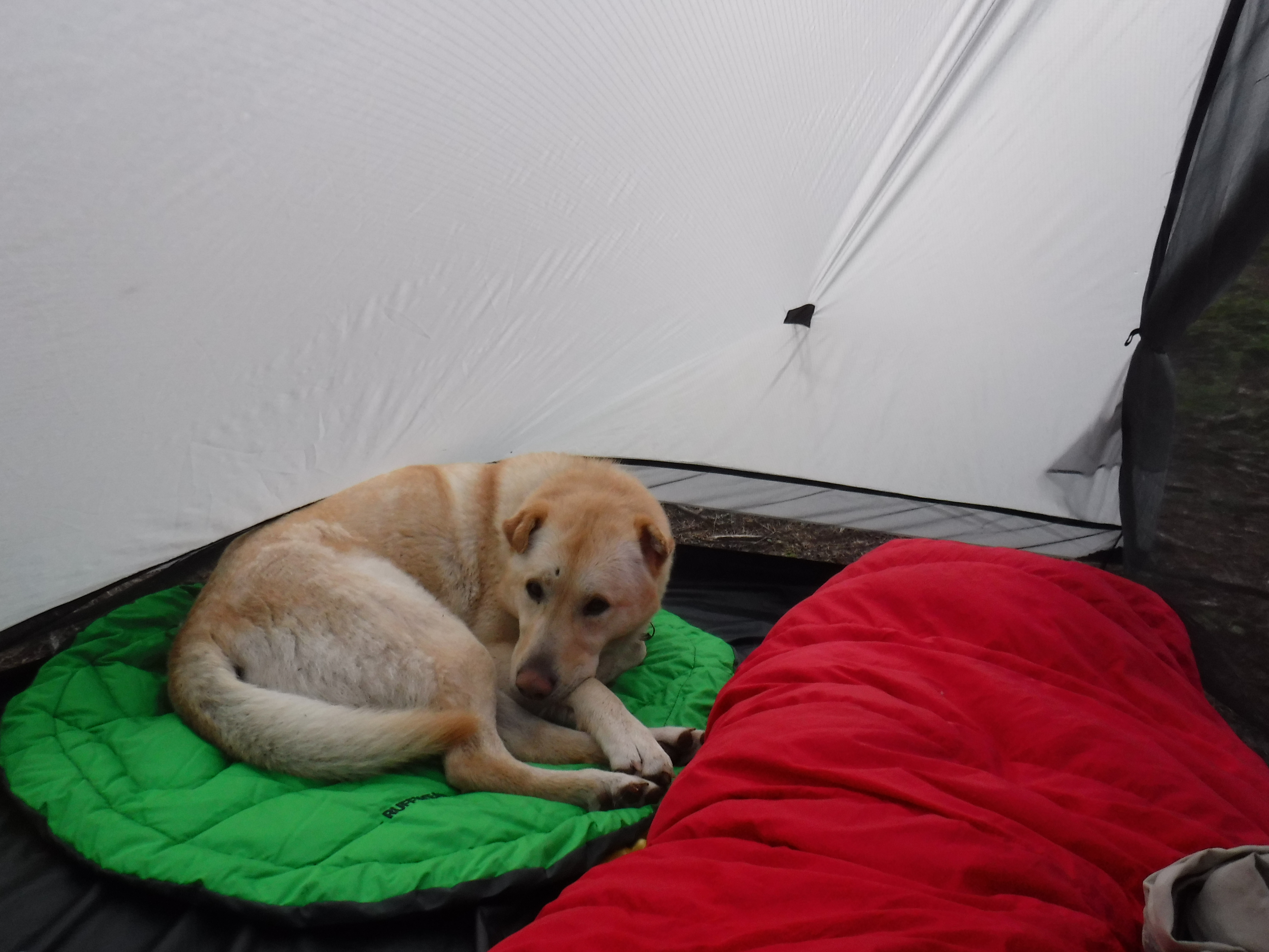 Snug in the tent ...